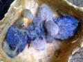 Pakan Atau Makanan Anakan Lovebird Umur 2 Bulan Keatas
