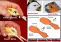 Cara Membedakan Burung Kenari Jantan Dan Betina Terlengkap