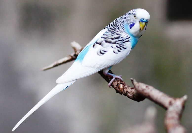 Download Suara Burung Falk Mp3 Harga