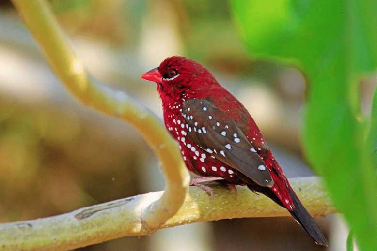 Jenis Burung Emprit Pipit Di Indonesia