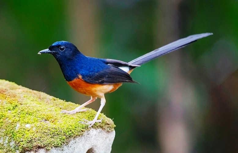 Unduh 64 Foto Gambar Burung Yg Bagus HD Terbaik