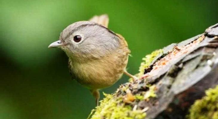 Www.ciri Ciri Burung U Flamdboyan Jantan : Lebih Bagus ...
