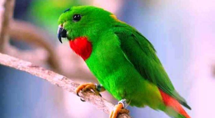 Download Suara Burung Serindit Gacor Pikat Master Mp3 Harga